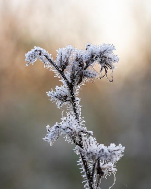 Verticale close-up shot van een bevroren plant met een onscherpe achtergrond Gratis Foto