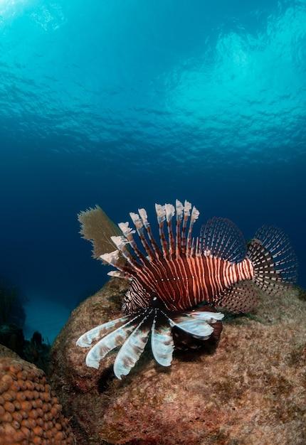 Verticale close-up shot van een gestripte exotische tropische vis diep onder water zwemmen Gratis Foto