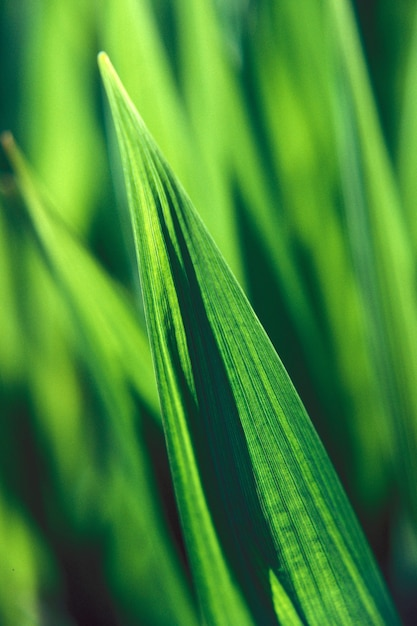 Verticale close-up shot van een groen blad met een wazige natuurlijke achtergrond overdag Gratis Foto