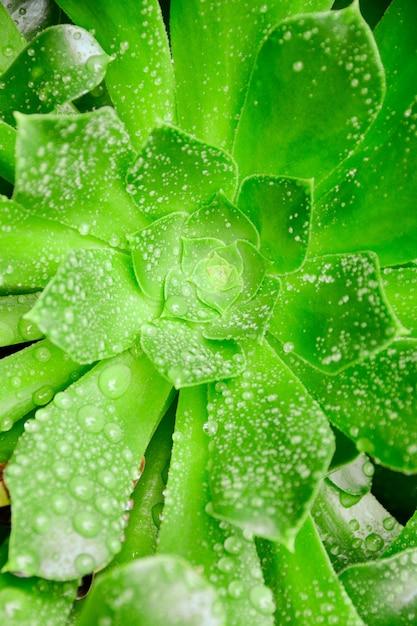 Verticale close-up shot van een groene plant bedekt met dauwdruppels Gratis Foto