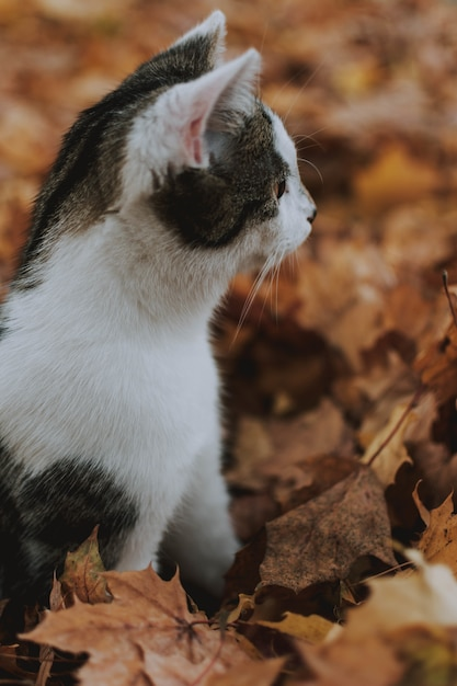 Verticale close-up shot van een schattige witte en grijze kat, zittend op de gevallen herfst esdoorn bladeren Gratis Foto