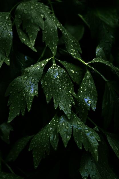 Verticale close-up shot van verse groene bladeren met veel dauwdruppels op hen Gratis Foto