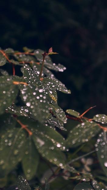 Verticale close-up van groene bladeren bedekt met dauwdruppels Gratis Foto