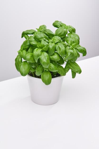 Verticale hoge hoek opname van een mooie plant in een witte vaas op een wit oppervlak Gratis Foto
