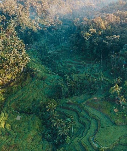 Verticale luchtfoto van met gras begroeide heuvels en palmbomen overdag Gratis Foto