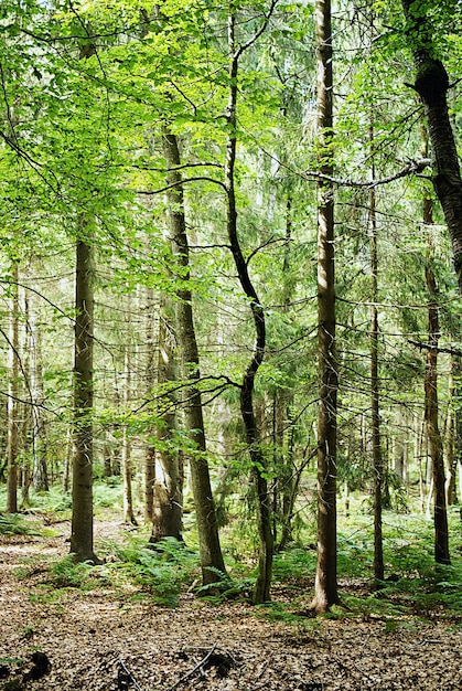 Verticale opname van de hoge bomen die overdag in het bos groeien Gratis Foto