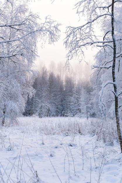 Verticale opname van een adembenemend bos volledig bedekt met sneeuw Gratis Foto