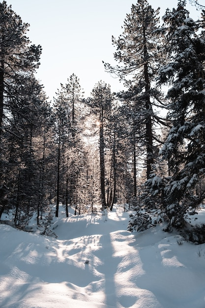 Verticale opname van een bos met hoge bomen in de winter Gratis Foto