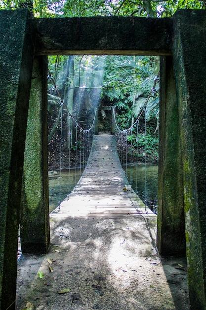 Verticale opname van een brug in een tropische jungle Gratis Foto