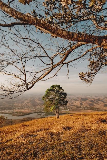 Verticale opname van een groene boom met uitzicht op een rivier en de bergen onder de heldere hemel Gratis Foto
