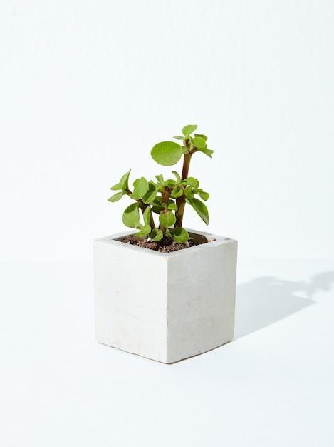 Verticale opname van een kamerplant in een betonnen bloempot op een witte achtergrond Gratis Foto