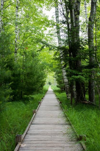 Verticale opname van een kunstmatig houten pad in het bos met heldergroen gras en bomen aan de zijkanten Gratis Foto