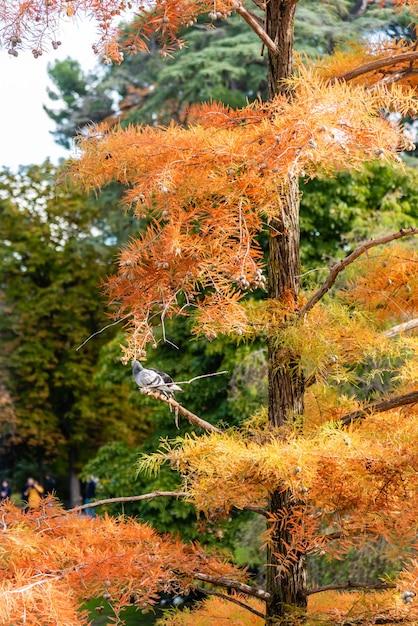 Verticale opname van een oranje dennenboom met een vogel erop Gratis Foto