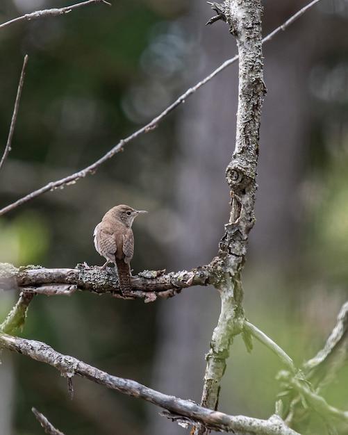 Verticale opname van een ouderwetse vliegenvanger op een boomtak Gratis Foto