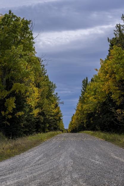 Verticale opname van een pad door een bos in clearwater, alberta, canada Gratis Foto
