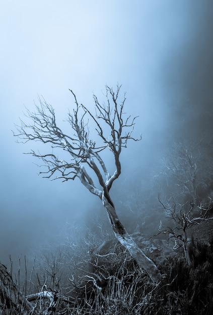 Verticale opname van een prachtige gedroogde boom in het midden van een dood bos in madeira, portugal Gratis Foto