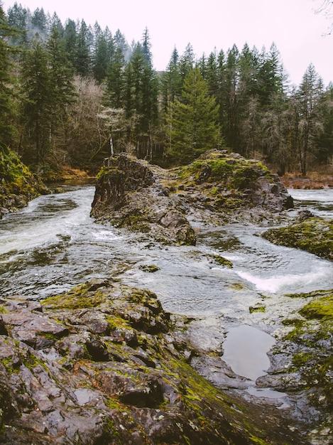 Verticale opname van een rivier omgeven door bomen en rotsen bedekt met mos overdag Gratis Foto