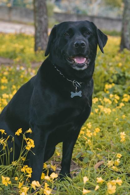 Verticale opname van een schattige gelukkige hond zittend op de grond in de buurt van gele bloemen Gratis Foto