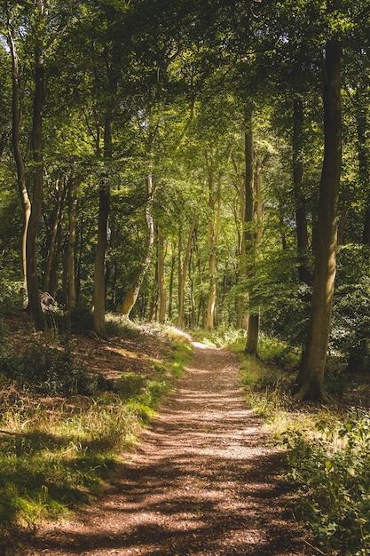 Verticale opname van een smal pad in een bos met veel hoge groene bomen Gratis Foto