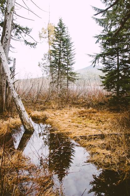 Verticale opname van een vijver met een weerspiegeling van bomen erop Gratis Foto
