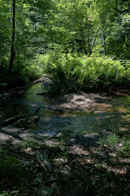 Verticale opname van een vijver met varens in het midden van het bos Gratis Foto