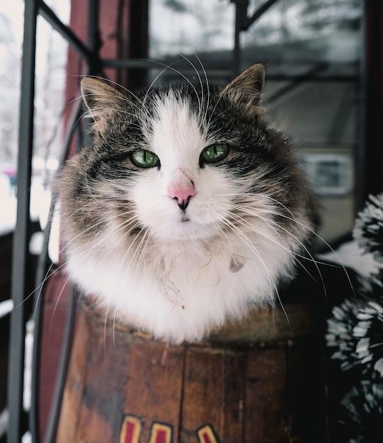 Verticale opname van een witte en zwarte kat in een kamer Gratis Foto