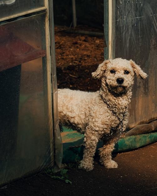 Verticale opname van een witte hond in zuid-korea die bij de ingang van een kas staat Gratis Foto