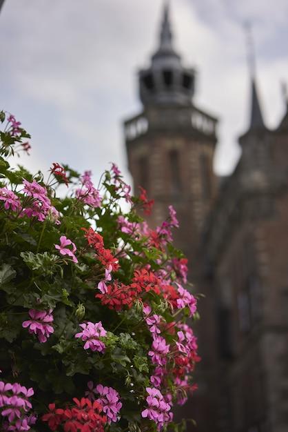Verticale selectieve aandacht shot van roze bloemen met een prachtig oud gebouw Gratis Foto
