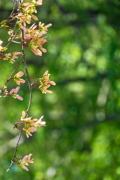 Verticale selectieve aandacht van appelbloesem bloemen met een wazige groene achtergrond Gratis Foto