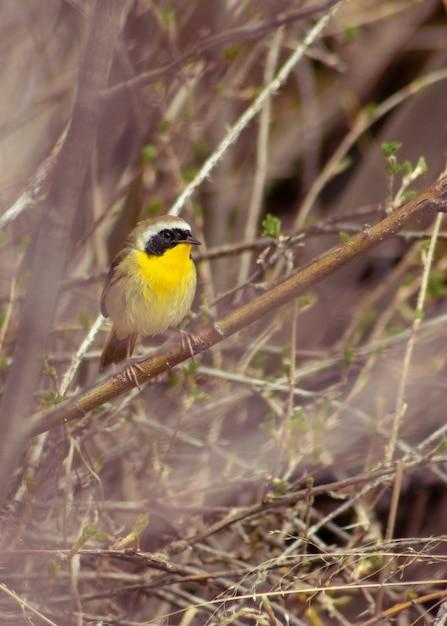 Verticale selectieve focus shot van common yellowthroat warbler zat op een tak Gratis Foto