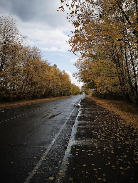 Verticale weergave van een natte weg met bomen aan de zijkanten onder de bewolkte hemel Gratis Foto