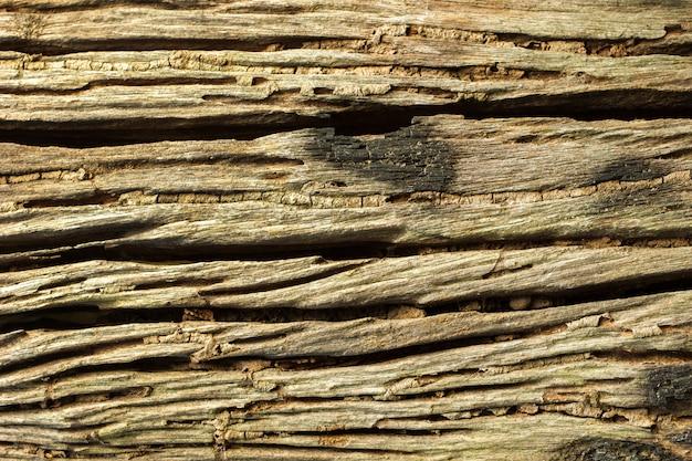 Verweerde gebarsten van oude schors en termieten loopbrug op de stam. Premium Foto