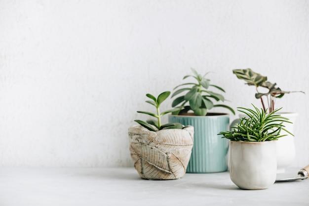 Verzameling van verschillende cactus- en vetplanten in verschillende potten. Premium Foto