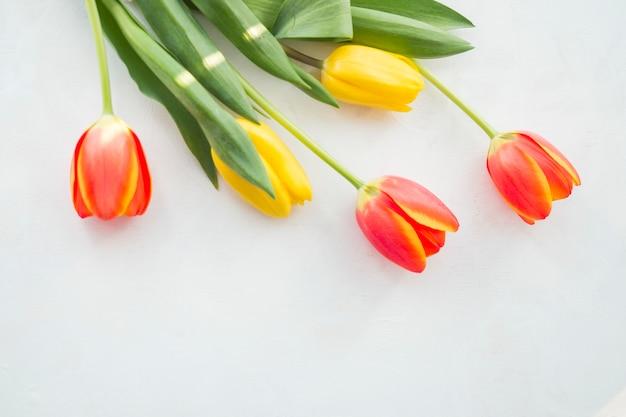 Vier tulpenbloemen op witte lijst Gratis Foto
