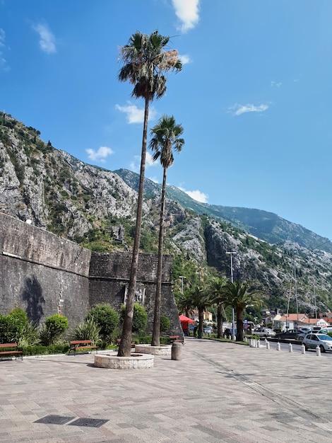 Vierkant met palmen in kotor, montenegro Gratis Foto