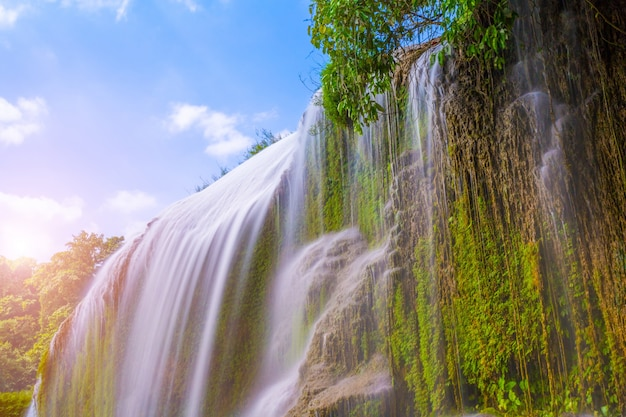 Vijver mooie bos meer jungle Gratis Foto