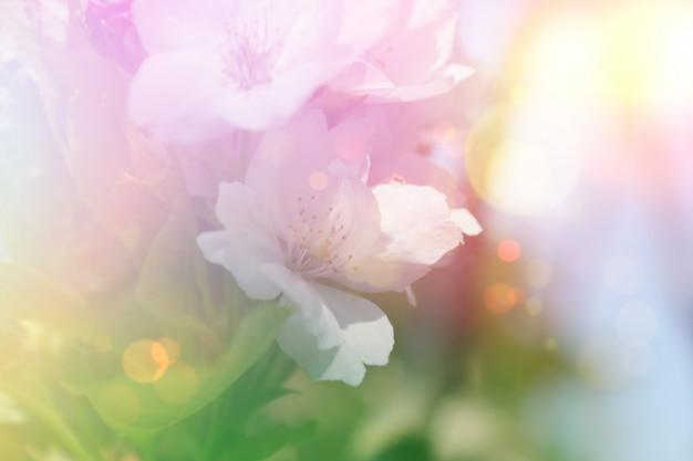Vintage bloesem bloem achtergrond Gratis Foto