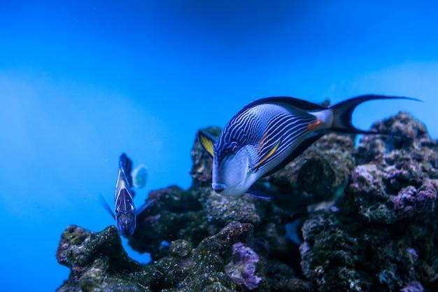 Vis koraal aquarium rif zee Gratis Foto
