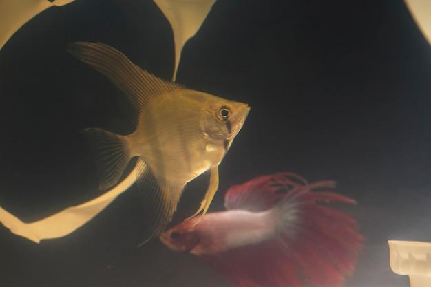 Vissen zwemmen in een vuile tank Gratis Foto