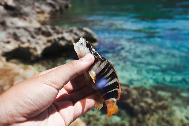 Vissers hand met vis in de buurt van zee Gratis Foto
