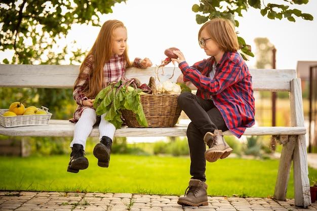 Vitaminen. gelukkig broer en zus appels in een tuin samen buiten verzamelen. Gratis Foto