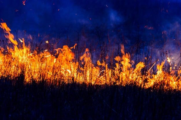 Vlamlichten verbranden gras Premium Foto