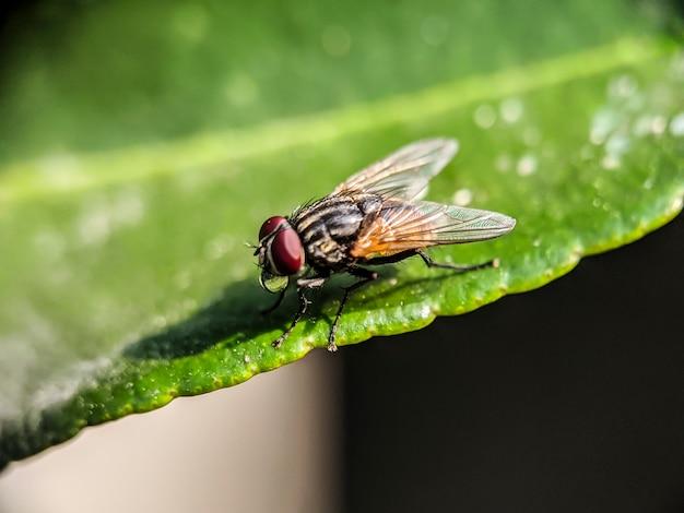 Vliegen op groene bladeren, met een wazig Premium Foto