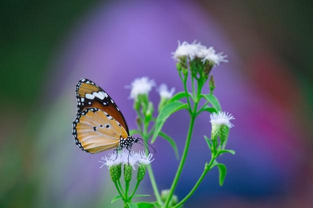 Vlinder aan de bloem plant Premium Foto