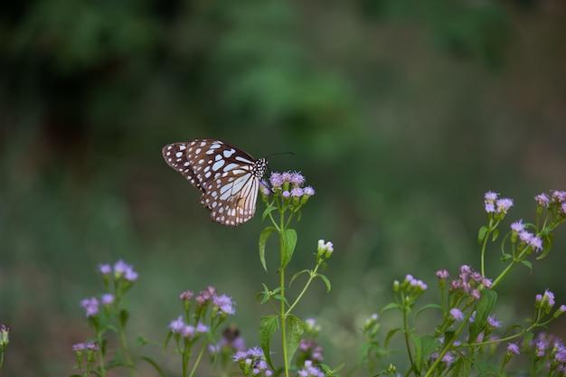 Vlinder aan de bloemplant Premium Foto