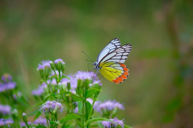 Vlinder aan de bloemplanten Premium Foto