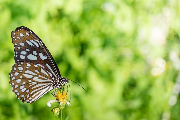 Vlinder het voeden op bloemaard Premium Foto