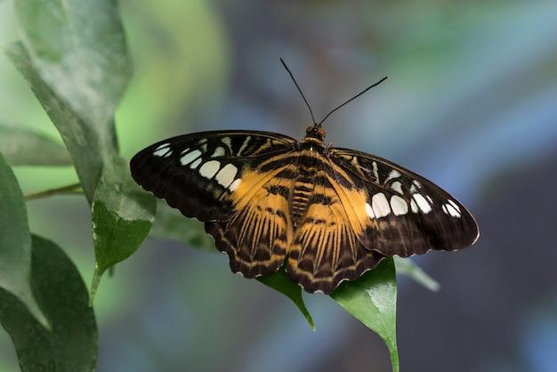 Vlinder met geopende vleugels op onscherpe achtergrond Gratis Foto