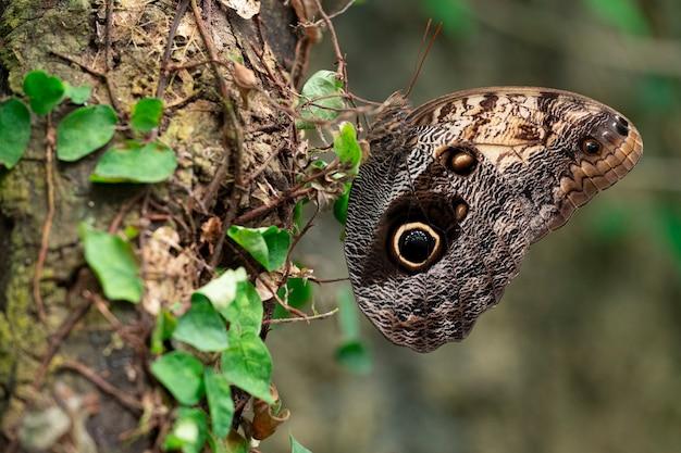 Vlinder met gesloten vleugels zat op een boomstam Premium Foto