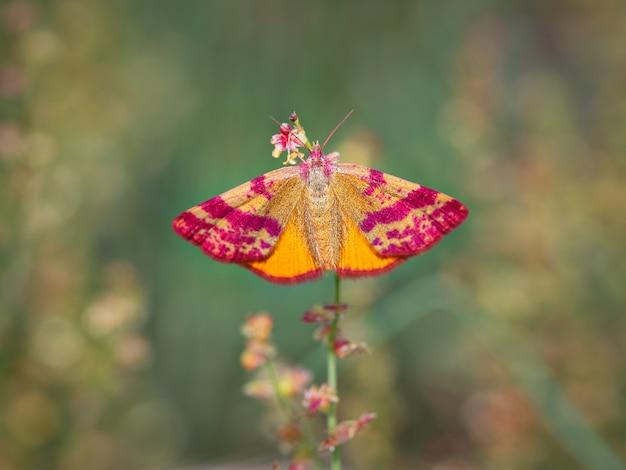Vlinder of mot in zijn natuurlijke omgeving Premium Foto